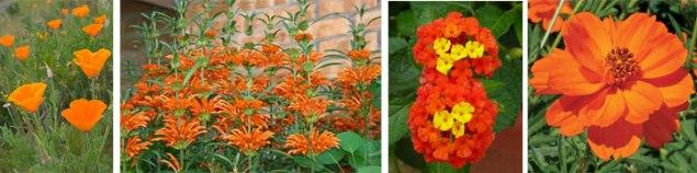 orangeFlowers