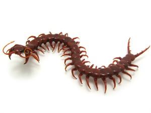 centipede2_1-1-300x225